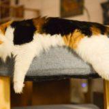2月22日は「猫の日」Twitterに限定ハッシュタグが登場!「猫の写真へたくそ選手権」も開催中!